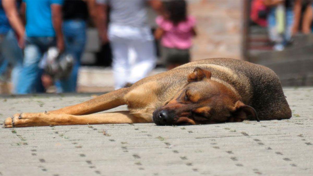 Mató de un disparo a un perro callejero que le movía la cola