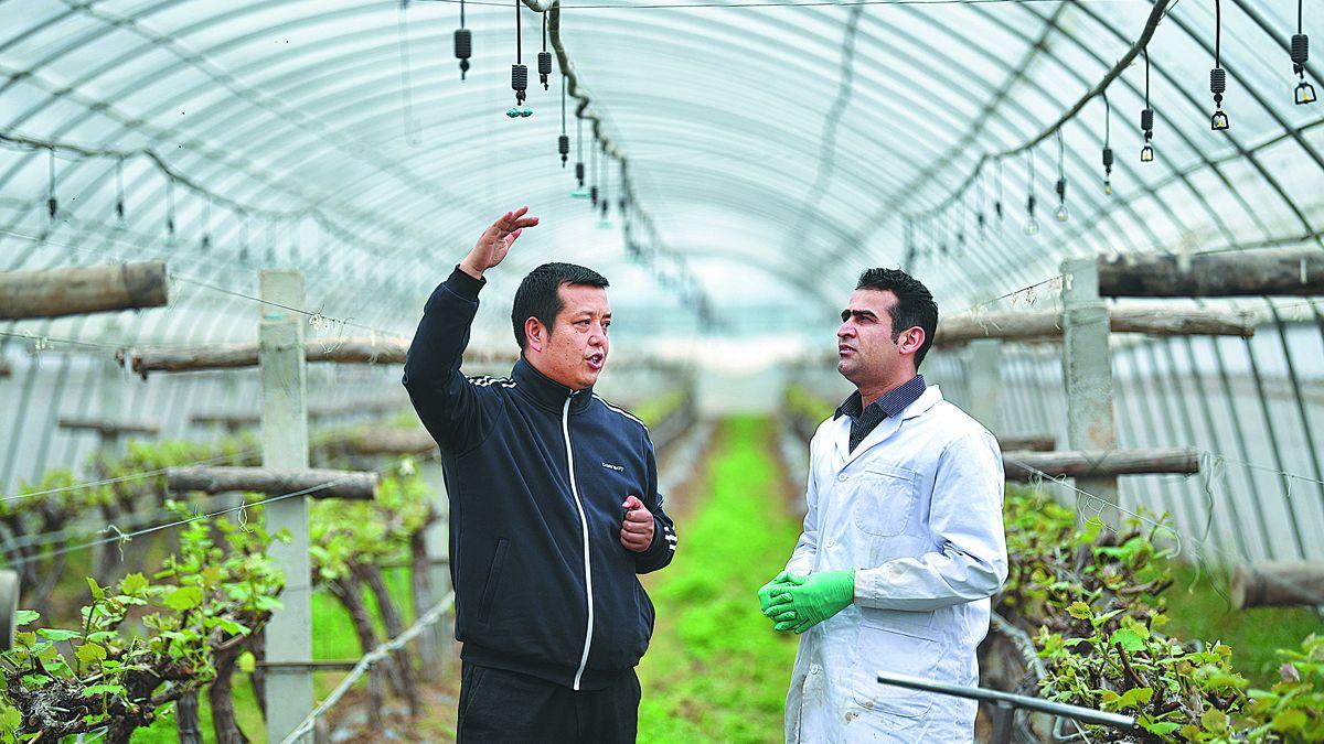 Un estudiante paquistaní recibe consejos sobre sistemas de riego en una cooperativa creada en un centro de demostración de tecnología agrícola en la provincia de Shaanxi. ZHANG BOWEN / XINHUA