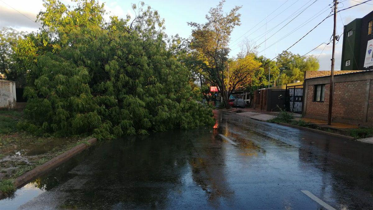En Las Heras un árbol cayó durante la tormenta