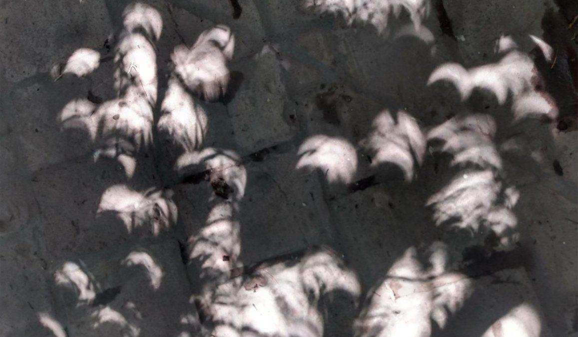 Mendoza: el extraño efecto del eclipse solar en las sombras. Foto: Josefina Canale
