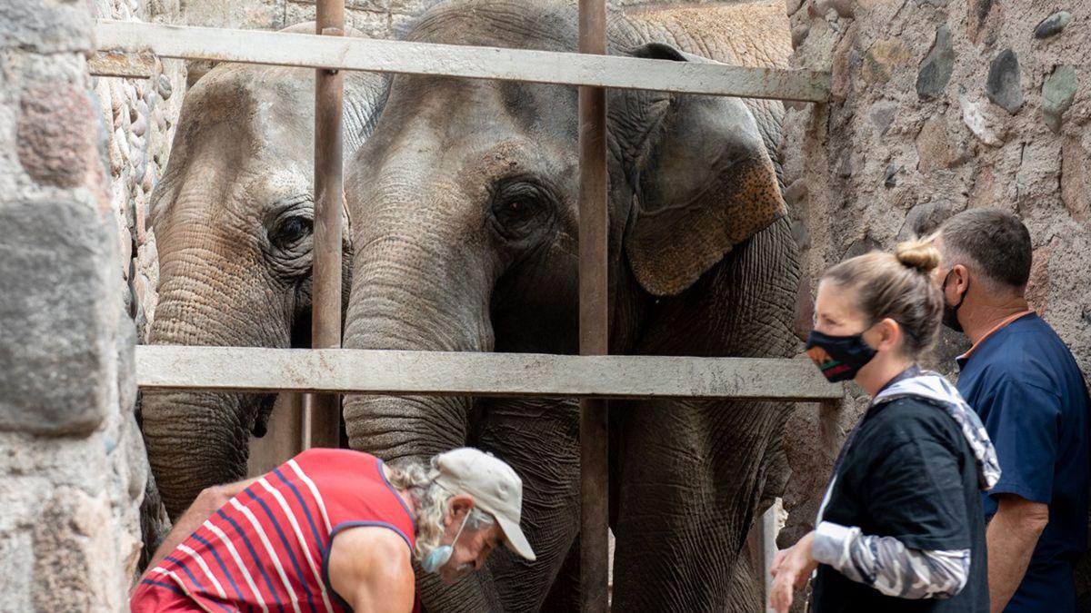 Las elefantas del ex Zoo tendrán una nueva vida en un santuario ubicado el estado central de Mato Grosso
