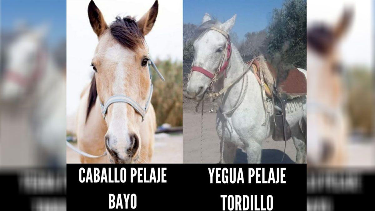 Ofrecen una recompensa para recuperar dos caballos robados