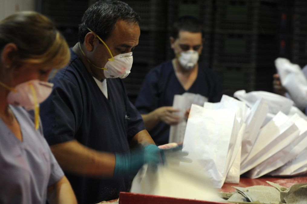 Mosca del Mediterráneo. Liberan millones de insectos esterilizados.