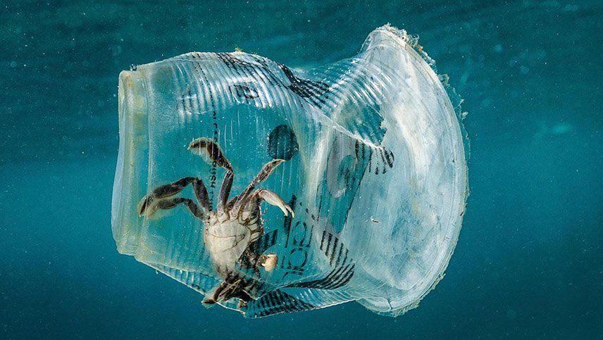 Descubren microorganismos que podrían devorar el plástico que flota en los océanos