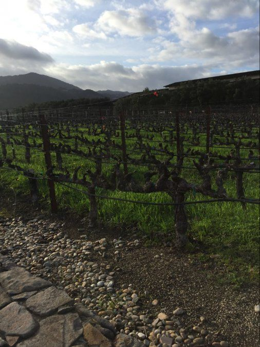 California y sus mejores vinos