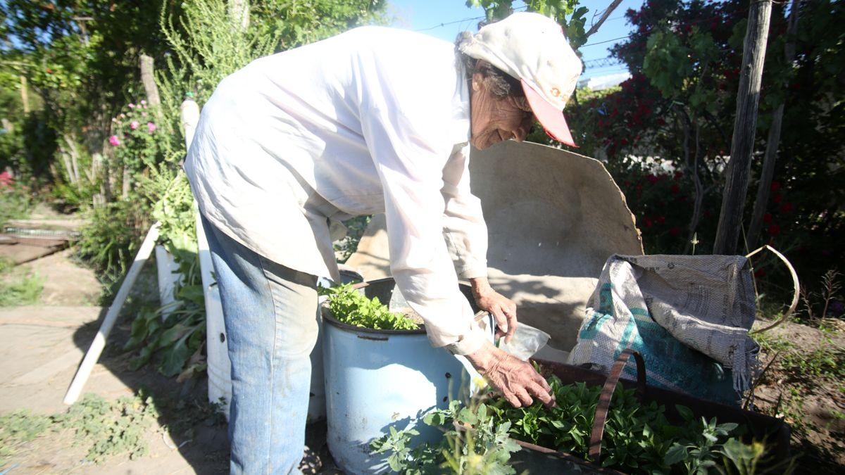 Los plantines de tomate están listos para ser puestos en la tierra. Desde el INTA y Crece desde el Pie se defienden a las variedades nativas y se creó un banco para almacenar semillas que luego servirán a los productores.