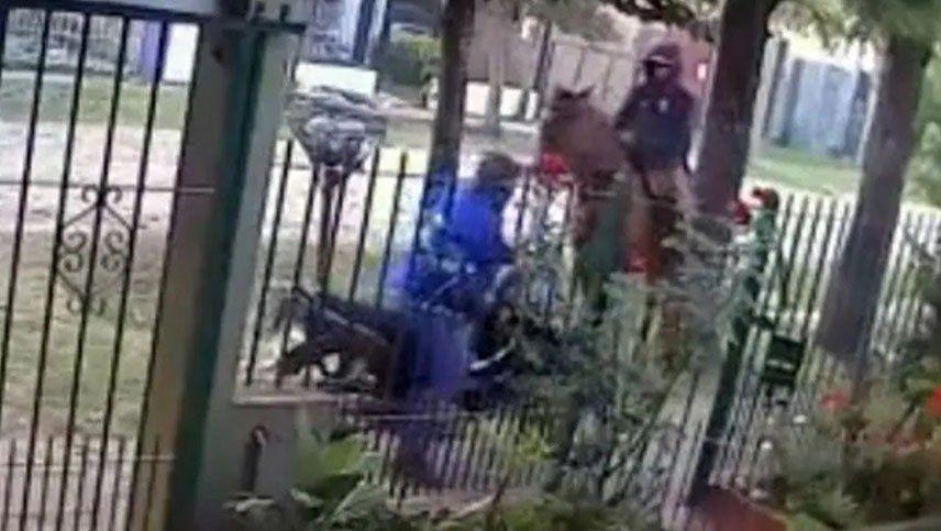 Video: como en las películas de cowboys, un ladrón intentó robar a caballo