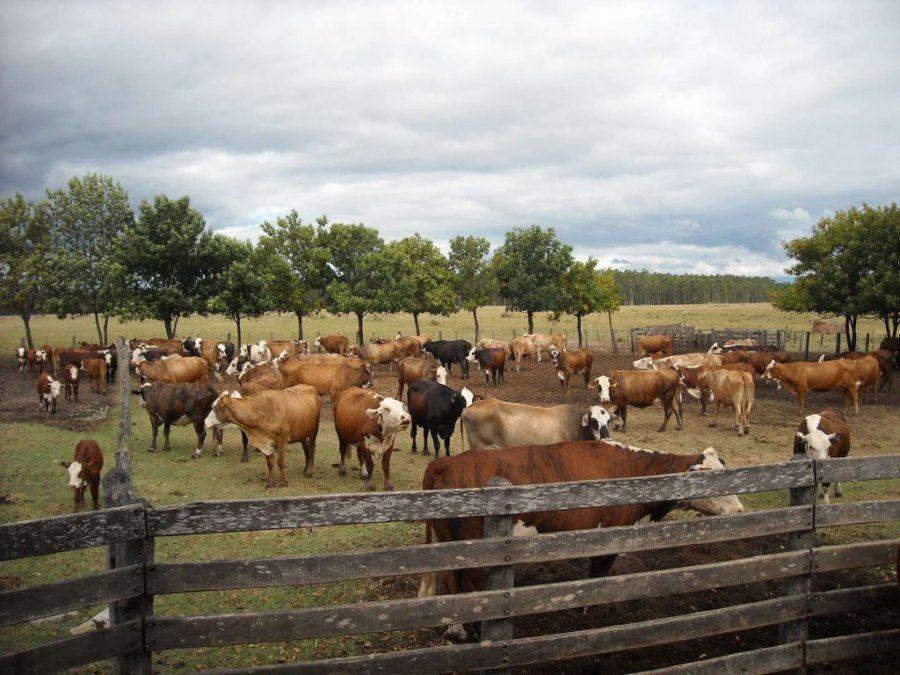 El proyecto de la Cámara de Comercio de San Rafael busca incrementar la producción del forraje para acrecentar también la ganadería en el Sur.